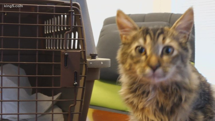 Former Amazon engineer creates app that reportedly translates your cat's meows