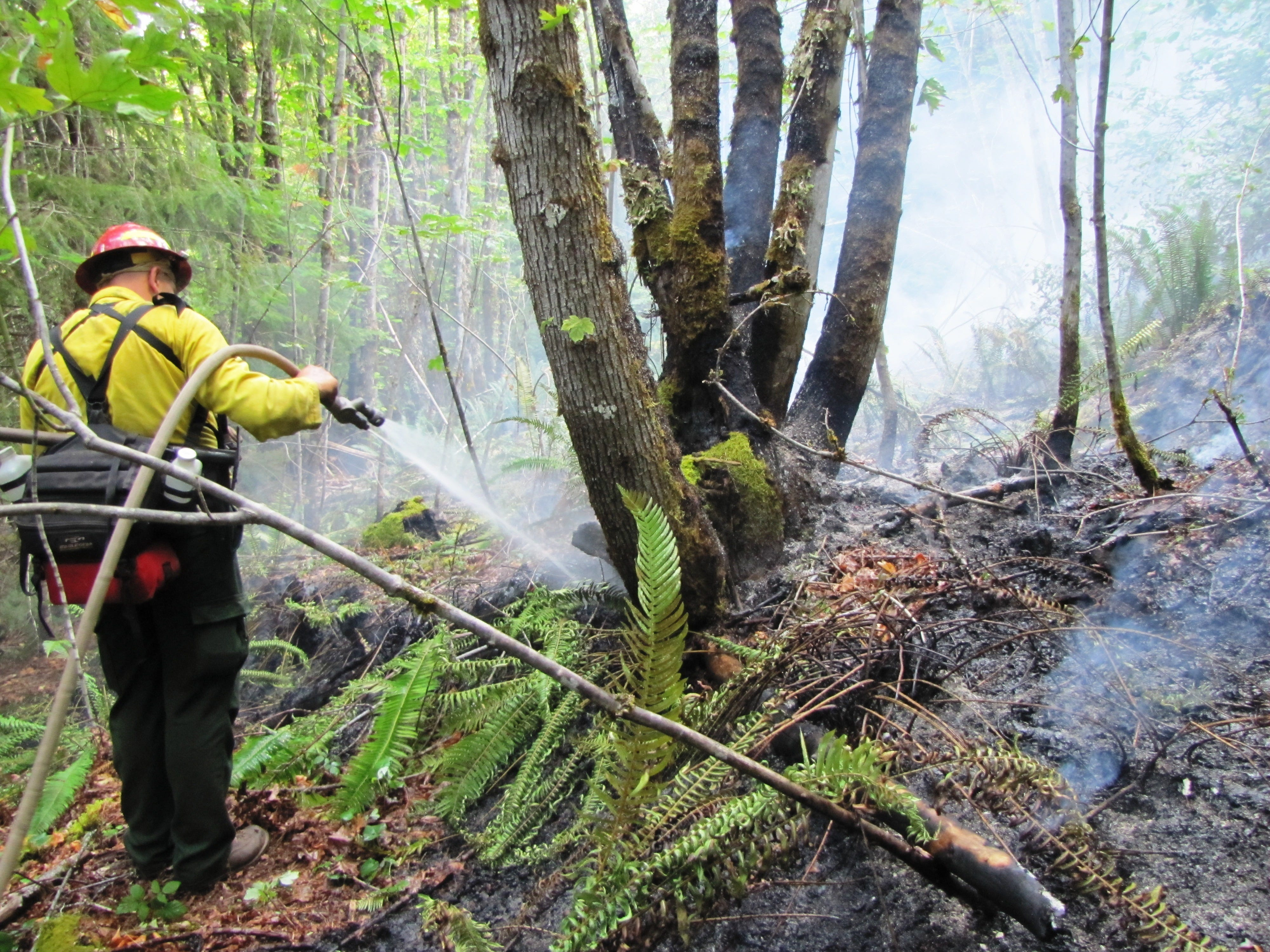Oregon wildfires: Nine small lightning fires dubbed Middle Fork Complex near Oakridge
