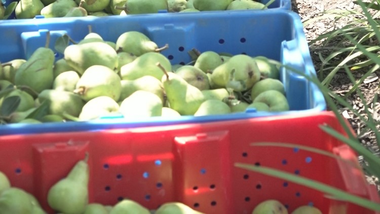 Portland nonprofit that distributes fruit to community in need of donations and volunteers