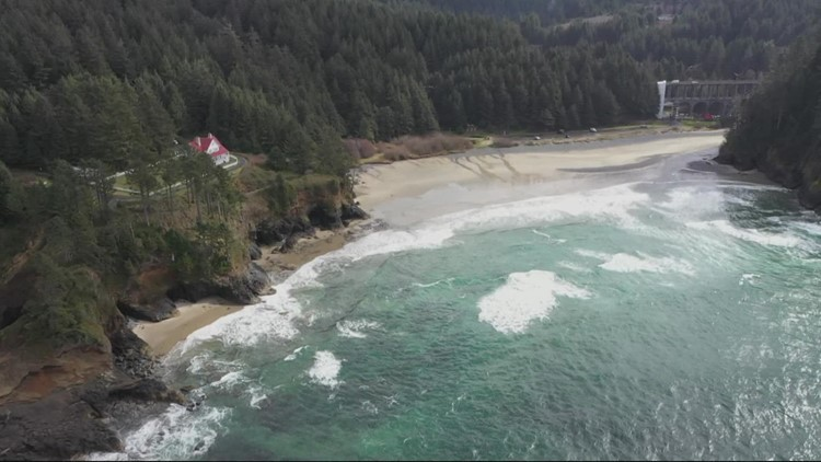 Researchers use trees along the Oregon Coast to better understand tsunami threat