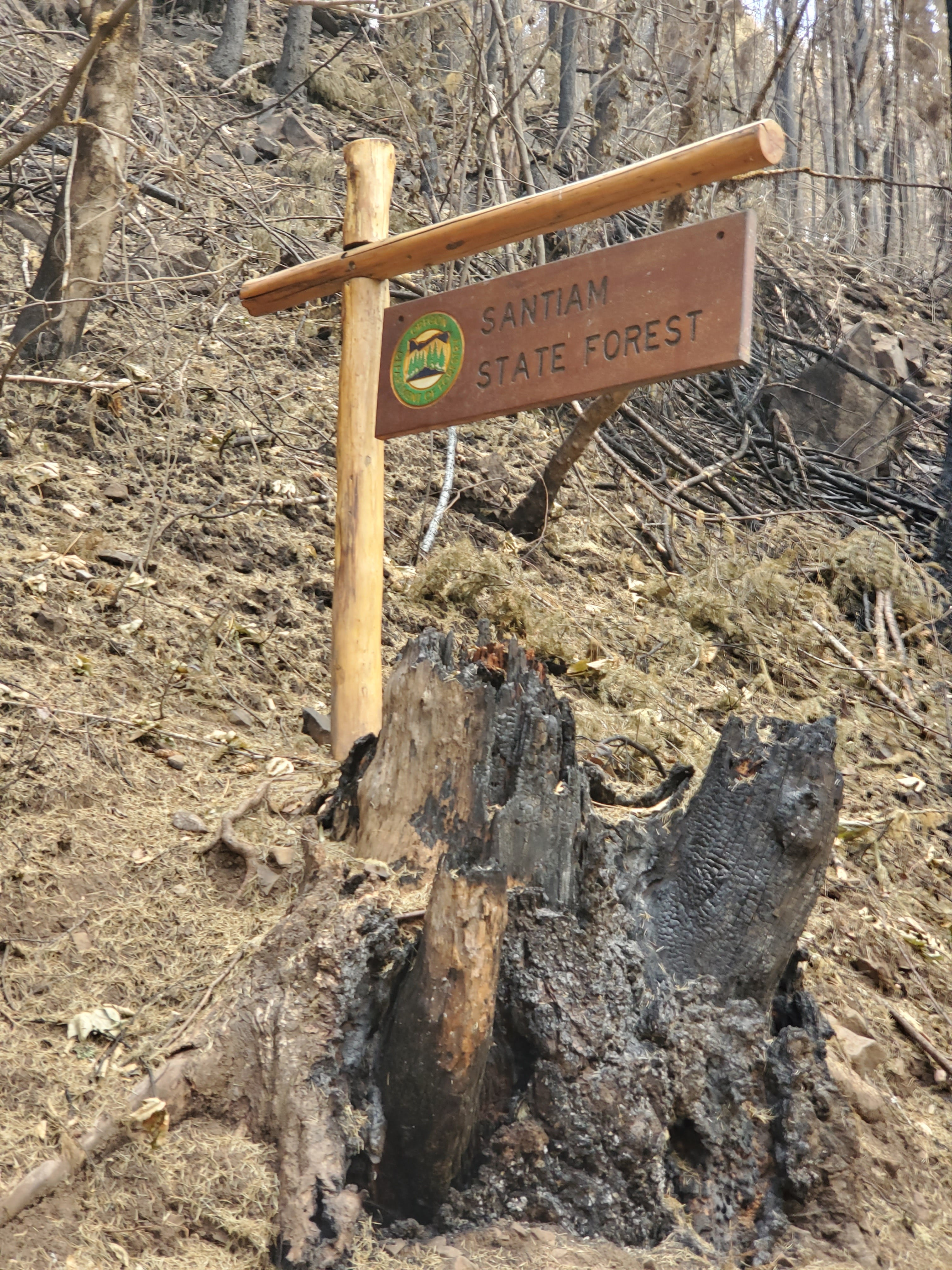 Three finalists for Oregon's next state forester will face wildfire, timber challenges